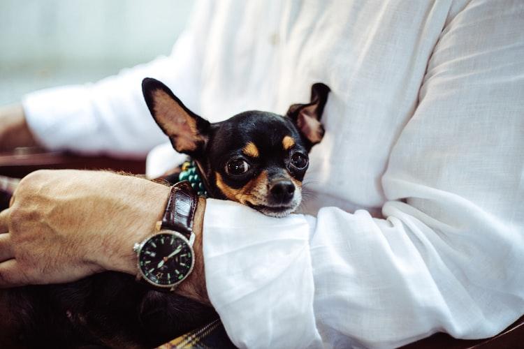 como-atrair-e-fidelizar-clientes-para-o-restaurante-sendo-pet-friendly